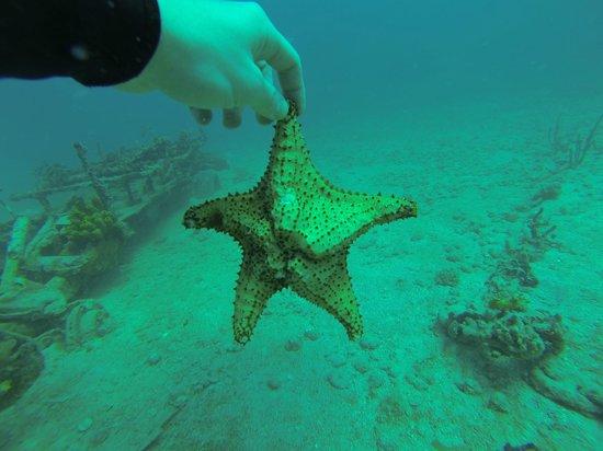 Pro Divers, Inc.: Starfish