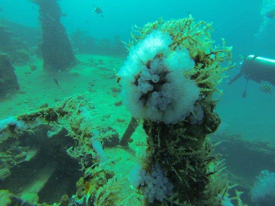 Pro Divers, Inc.: Coral