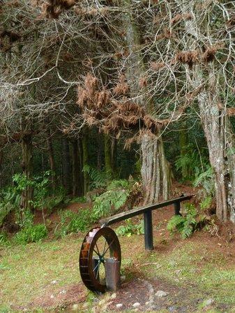 Horto Florestal: Decoração do caminho