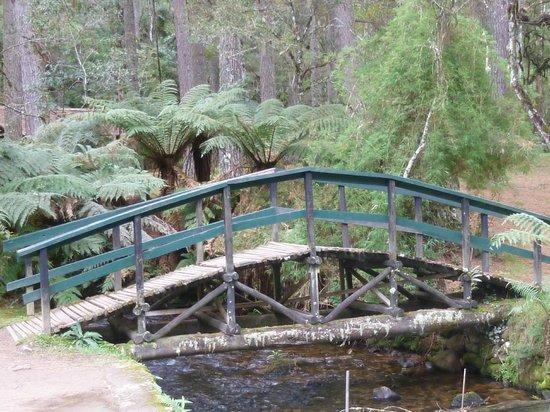 Horto Florestal: Lago