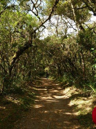 Horto Florestal: Trilha (Fácil)