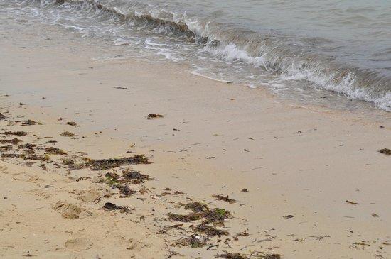 Pullman Phuket Panwa Beach Resort: грязный пляж после прилива