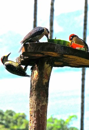 Villa Decary : Woodpeckers at feeder