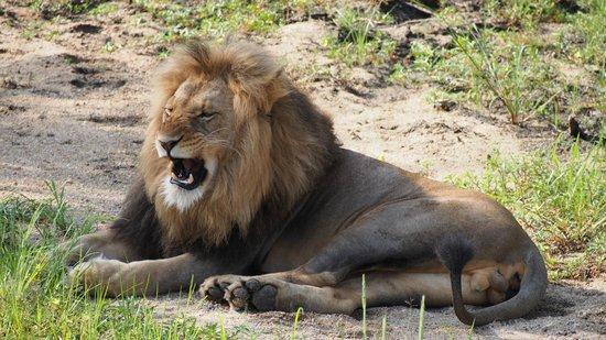 Karongwe River Lodge: Safari