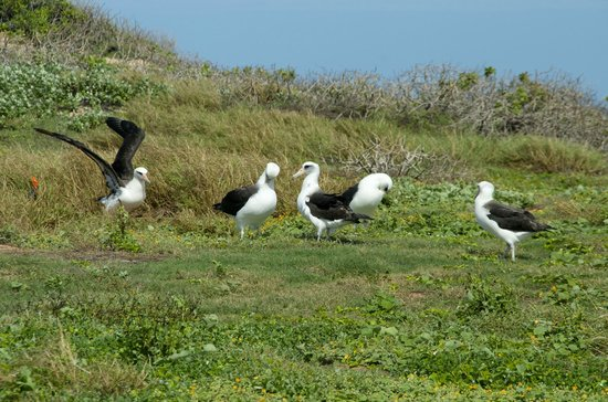 Ka'ena Point State Park: Albatros