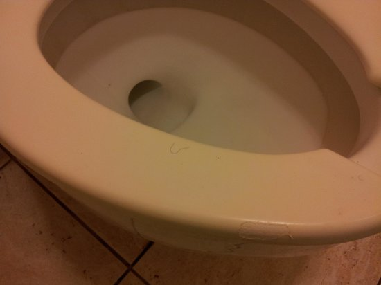 Golden Palms Inn & Suites: Hair on toilet seat