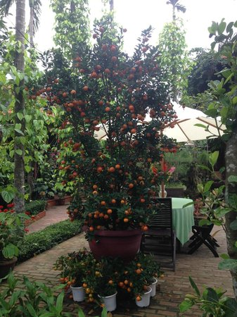 Betel Garden Villas: Jardin