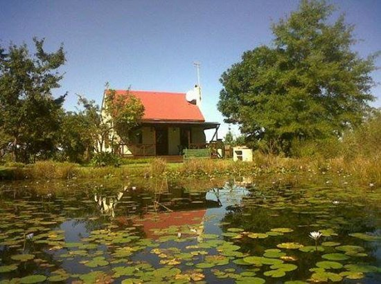 Forest Edge Nature-lovers' Retreat : Froggy Pond Cottage at Forest Edge