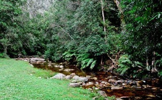 Forest Edge Nature-lovers' Retreat : Jubilee Creek Picnic Spot and Walking Trail