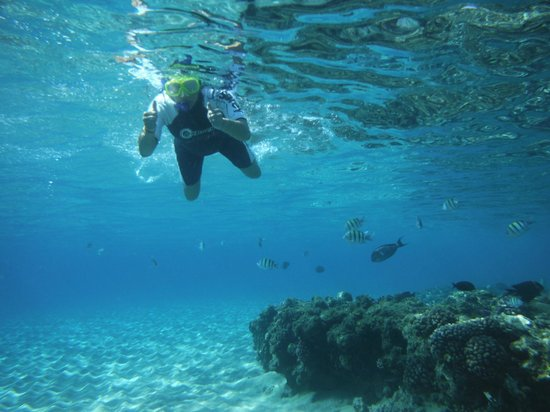Hilton Sharm Dreams Resort : Snorkeling