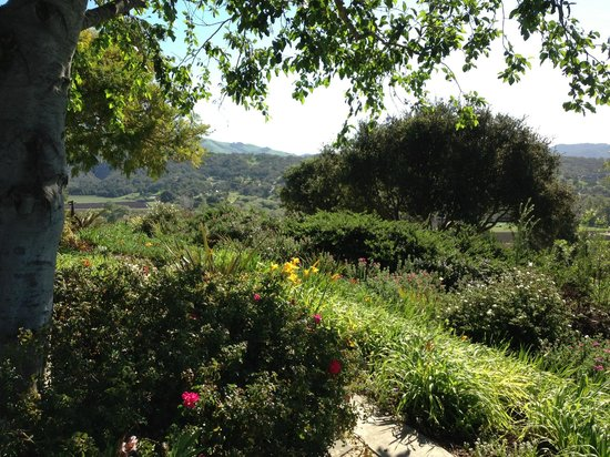The Casitas of Arroyo Grande: View from our deck.