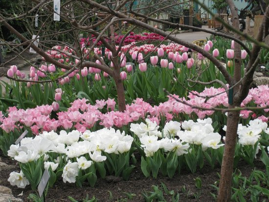 Eden Project: Tiptoe through the tulips in the Mediterranean biome