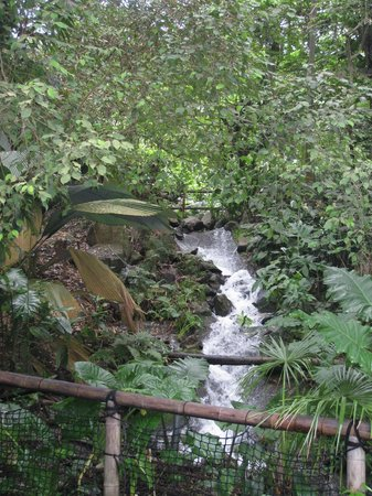 Eden Project: A waterfall adds atmosphere to the Rainforest biome