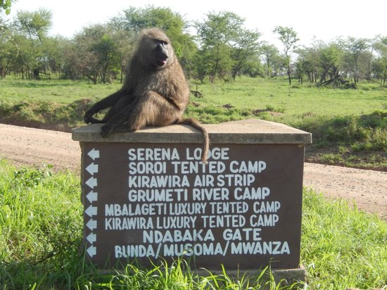 Serengeti Serena Safari Lodge: Deciding Where to Stay