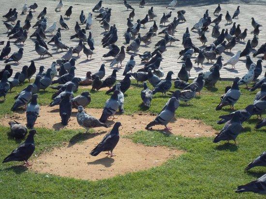 The Corniche : Al-Bidah Birds at Corniche