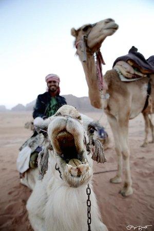 Obeid's Bedouin Life Camp: Sunset camel ride