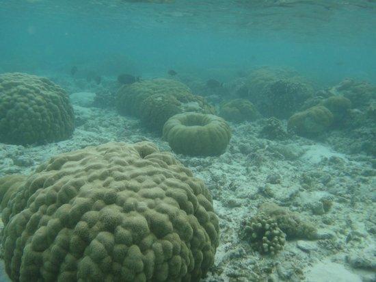 Κουραματί: coraux devant le kuramathi
