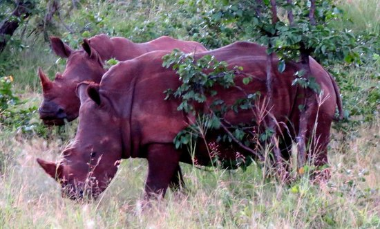 Wilderness Safaris Toka Leya Camp : Walking Rhino Tour