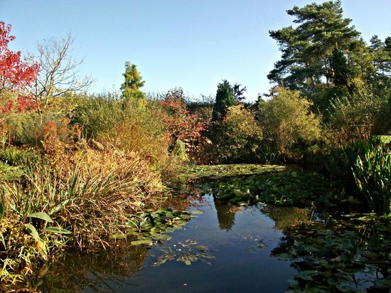 Goltho Gardens October 2013