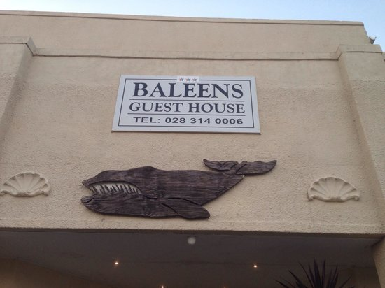 Baleens: Good spot for whale watching - in season.