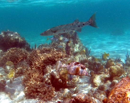 Sin Duda Villas: Spend hours exploring the hundreds of coral heads just off the beach. No need to hire a boat.