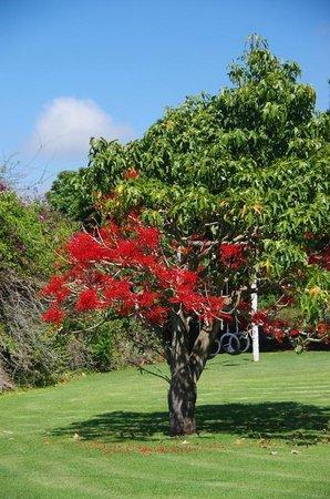The Green Tree Guest Cottages : Parc de la guest house
