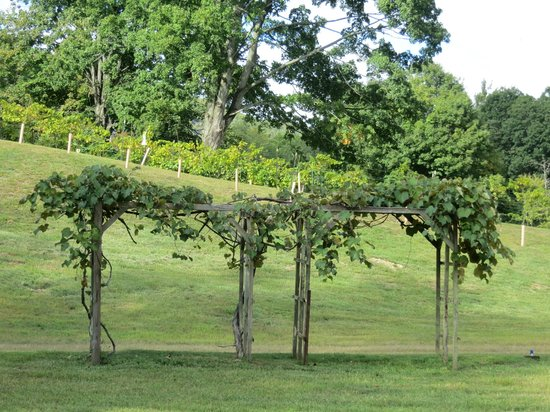 Torne Valley Vineyards