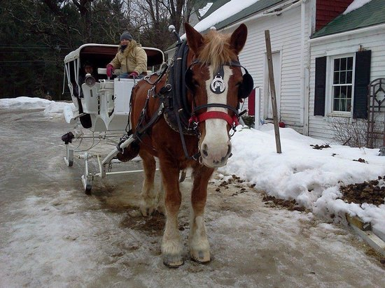 Stables at the Farm by the River: returning from ride