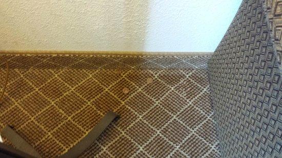 Staybridge Suites Philadelphia - Mt Laurel: Pennies on the rug, room not cleaned well