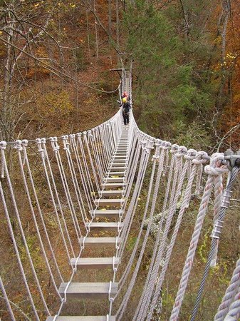 Navitat Canopy Adventures - Asheville Zipline: awesome bridges and platforms made for beautiful spots to view the landscape