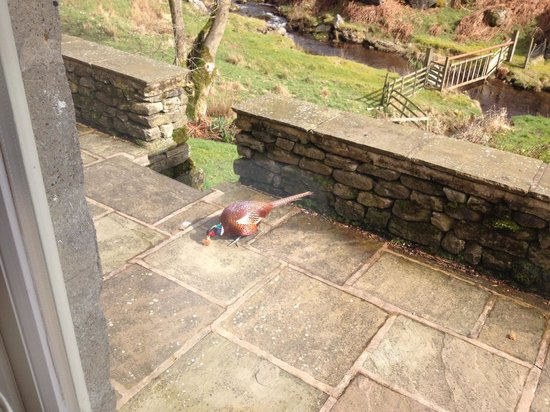Jerry and Bens Cottages: A pheasant outside the cottage window