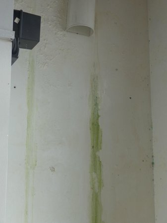 The Reed Boutique Hotel : MOULD and leaky walls