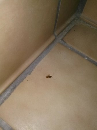 I-Drive Grand Resort & Suites : dead roach