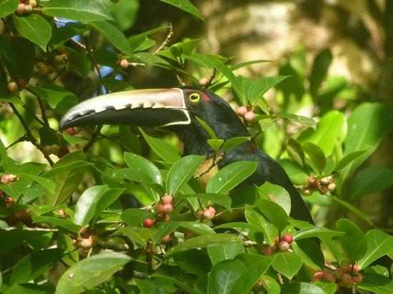Toucan & Tarpon: Dans l'arbre magique juste entre les bungalows