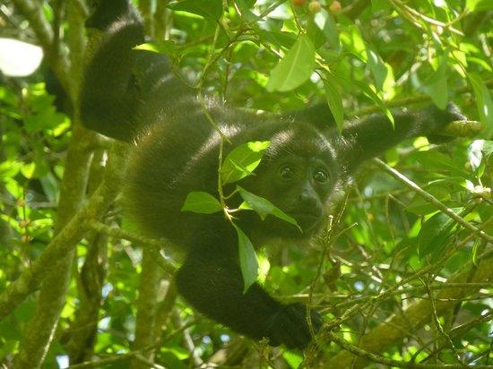 Toucan & Tarpon : Dans l'arbre magique juste entre les bungalows