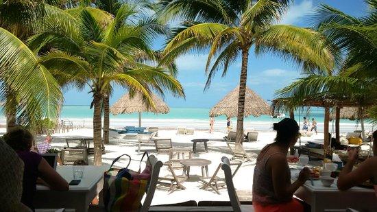 Mandarina Seaside Restaurant by Casa Las Tortugas: View of beach from patio