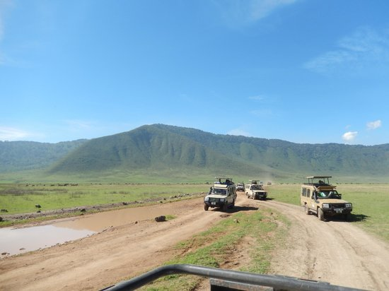 Ngorongoro Wildlife Lodge : Safari Vehicles in the Crater