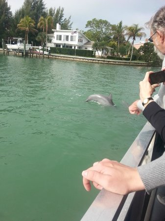 Sarasota Bay Explorers: Delfin
