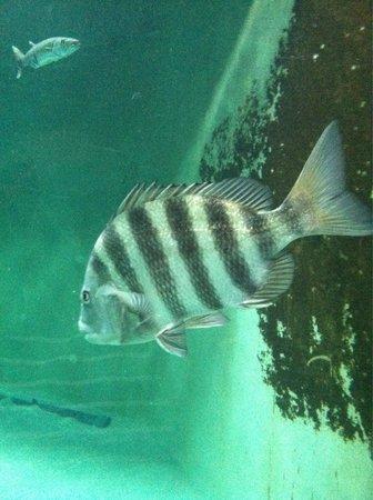 Nc Aquarium Picture Of North Carolina Aquarium At Pine