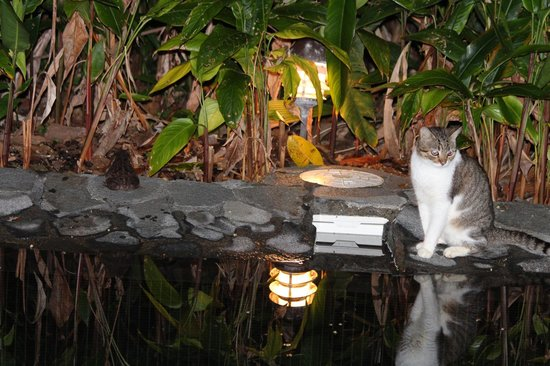 Geckoes Lodge: Pimm the night watchman at the plunge pool.  Note the toad on the left