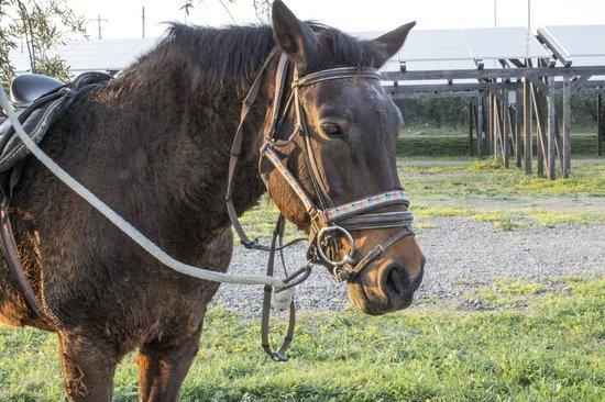 Carlentini, Italia: Cavallo (area maneggio)