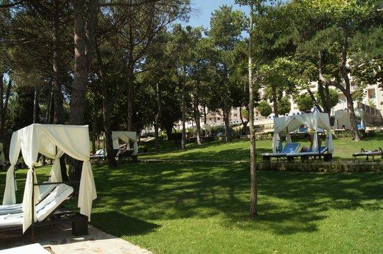 Melia Grand Hermitage: Красивые лежаки в соснах