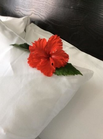 Azul Ixtapa Beach Resort & Convention Center : flower