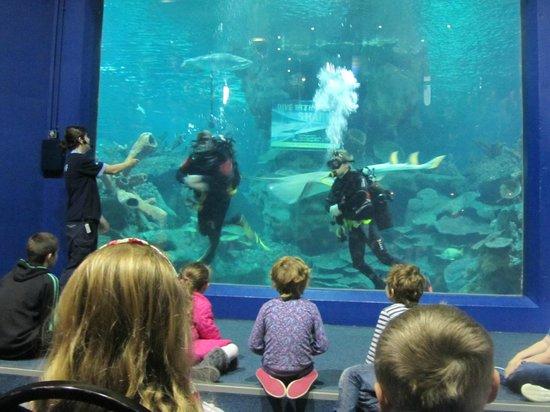 Blue Planet Aquarium: The main tank feeding the sharks