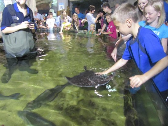 Blue Planet Aquarium: Touching time with a Ray - Fab