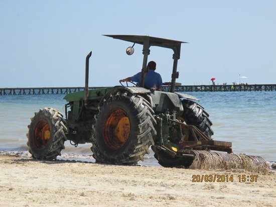 Moon Palace Golf & Spa Resort: Tractor collecting seaweed
