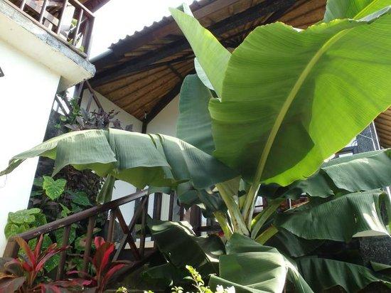 Bukit Indah Home Stay: Большие листья под бунгало