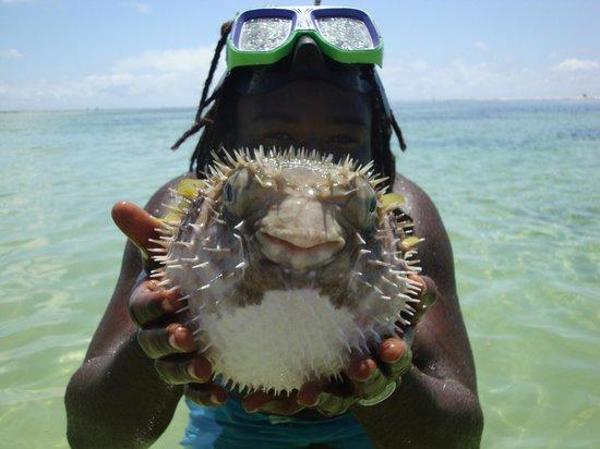 Jumbo Watamu: Pesce palla alle piscine naturali