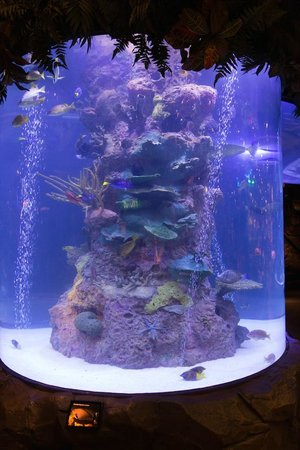 Rain Forest Cafe at MGM Grand Hotel and Casino: Fish tank