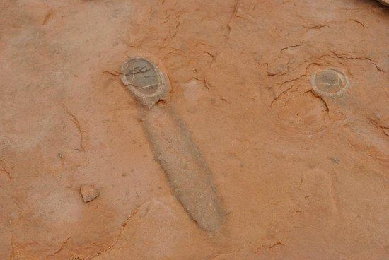 Dinosaur Tracks: Fossilized egg